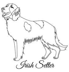 Irish red setter dog outline vector