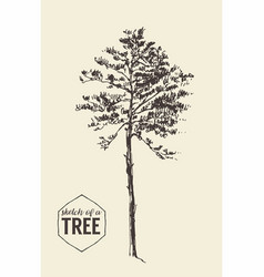 Pine tree vintage drawn sketch vector