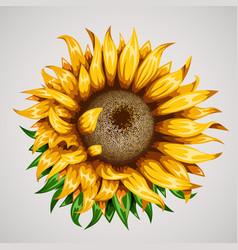 realistic beautiful sunflower yellow flower vector image