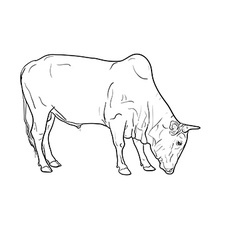 Drawing of ox vector
