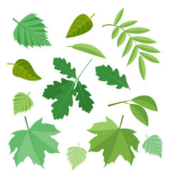 collection of green leaves vector image