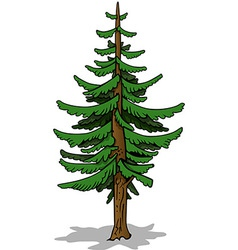 Coniferous tree vector