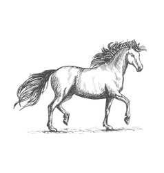 Horse sketch with galloping arabian racehorse vector