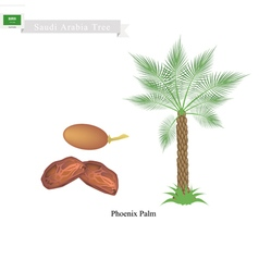Phoenix palm a national tree of saudi arabia vector