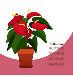 Anthurium plant in pot banner vector
