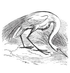 White Heron vintage engraving vector image