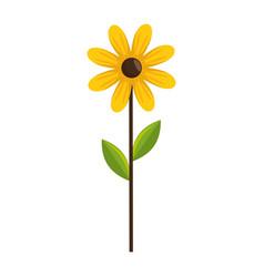 beautiful sunflower gardening vector image