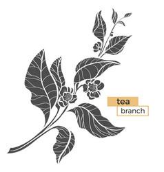 tea branch silhouette vector image vector image
