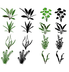 Water plants vector