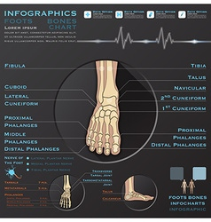 Foot bone skelatal system infographic infocharts vector