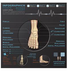 Foot bone skelatal system infographic infocharts vector