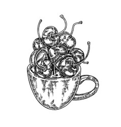 hand drawn cherry in mug berry vector image vector image