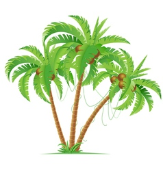 Three coconut palms vector image