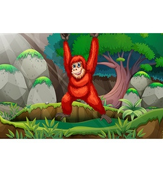 Orangutan in forest vector image