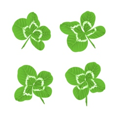Leaf clovers symbol of good luck vector
