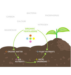 diagram of nutrients in organic fertilizers vector image