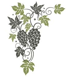 Vine leaves grapes vector