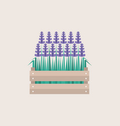 Lavender flowers growing in a wooden crate flat vector