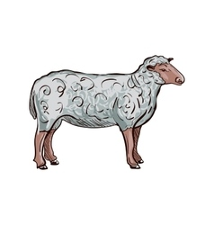 doodle sheep vector image