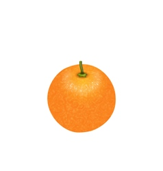 Photo-realistic orange fruit isolated vector