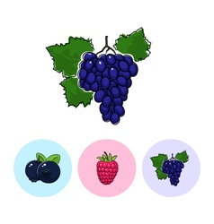 Fruit icons grapes raspberries blueberries vector