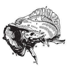 The mastoid and petrous portions of the temporal vector