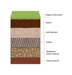 Soil horizons and layers vector