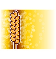 gold corn on the background vector image