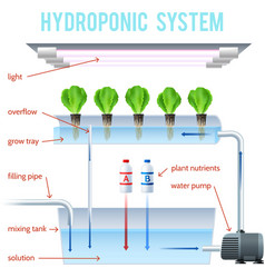 Hydroponics colored infographic vector
