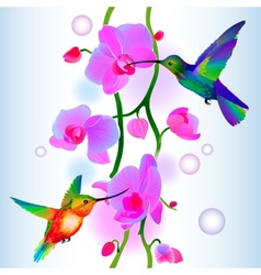 Seamless background with orchids and humming-birds vector image