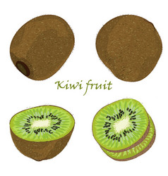 Set of hand-drawn kiwi fruit single peeled and vector