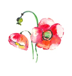 Watercolor poppy flower vector