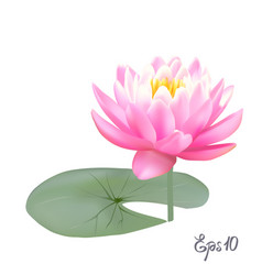 beautiful realistic of a lily or vector image