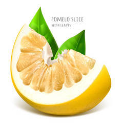 Pomelo slice with green leaves vector