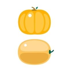 Fresh orange pumpkin isolated vector