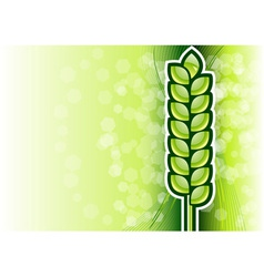 Green corn on the background vector