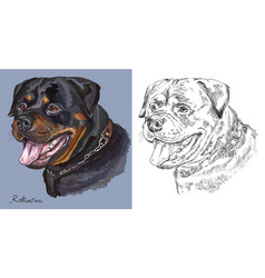 rottweiler colorful and monochrome hand drawing vector image