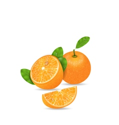 Set Orange Fruits Cut and Slices vector image vector image