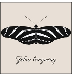 Zebra longwing butterfly card vector image vector image