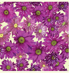 background of bright purple chrysanthemums vector image vector image