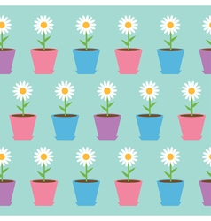White daisy chamomile flower in pot camomile vector