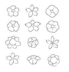Hand draw brush flower on white background vector