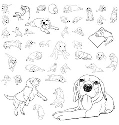 Drawing set of adorable beagle dog vector