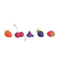 Bright berries on white vector