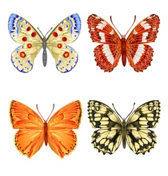 Various butterflies mountain meadow and forest vector image