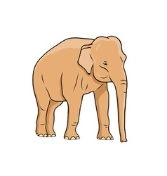 Elephant isolated on the white vector