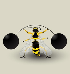 Loosing weight bee vector image