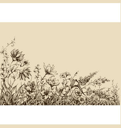 field flowers border drawing vector image vector image