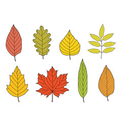 Hand drawn colorful autumn leaves set vector