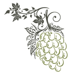 Vine leaves grapes vector image